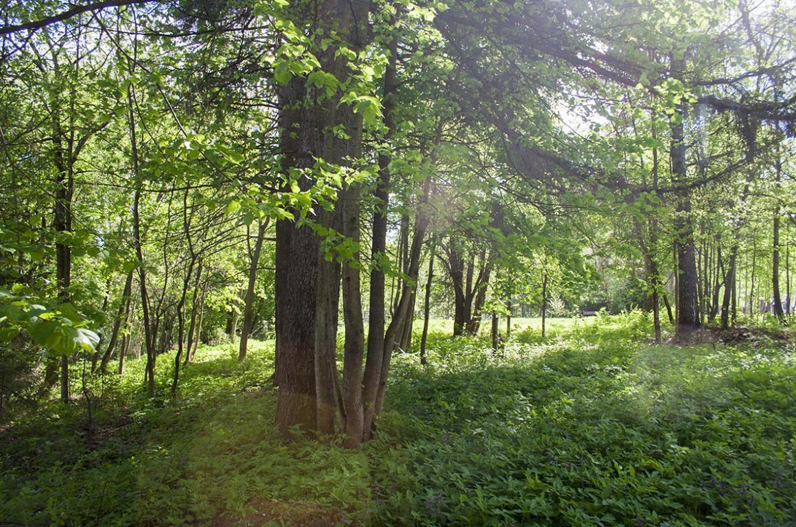 Как взять лесной участок в аренду