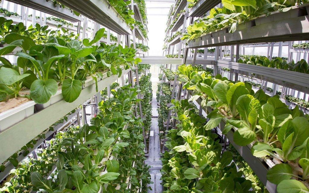 Прибыльный бизнес: выращивание зелени на продажу 32