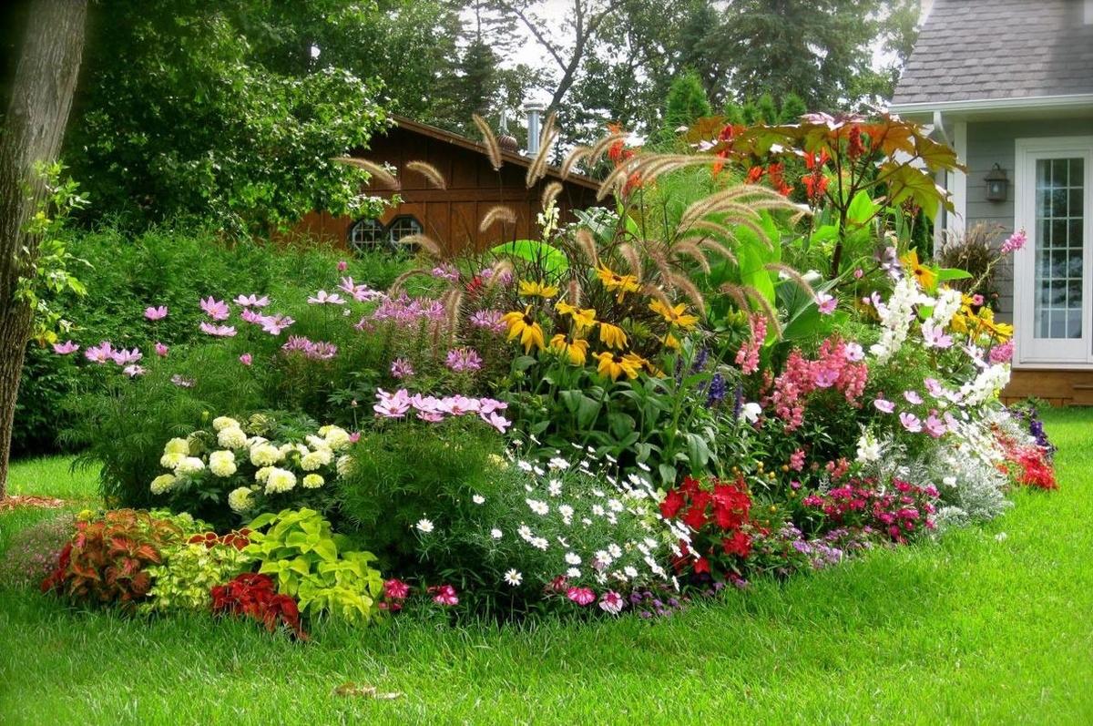 Цветы на даче почтой
