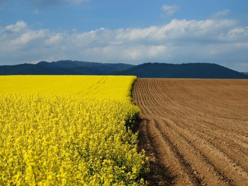 земельные участки сельскохозяйственного назначения