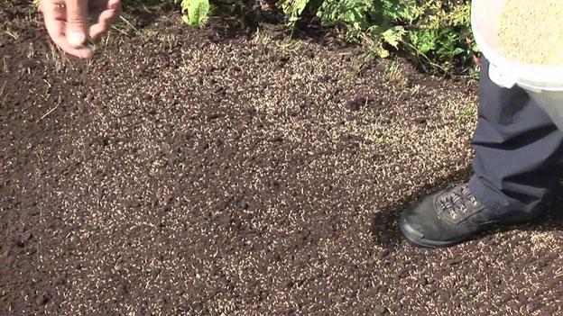 Как посадить газонную траву на даче своими руками 73