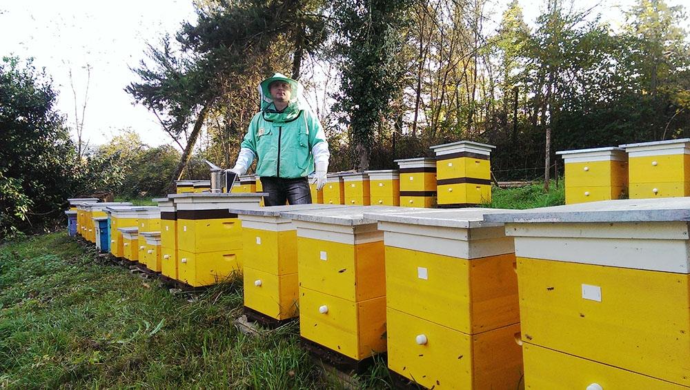 Пчеловодство становится все более прибыльным делом