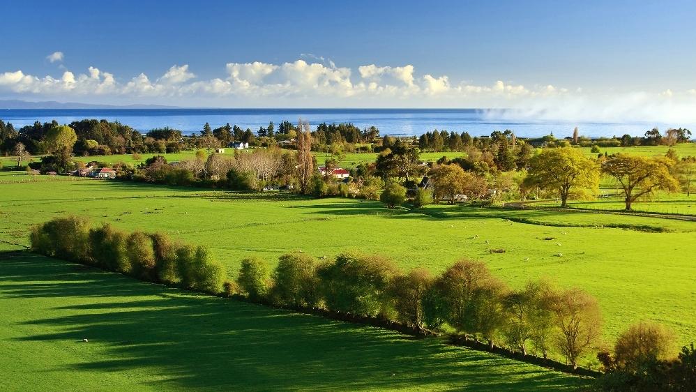 Преимущественное право выкупа земельного участка у арендатора